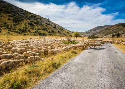 copia bigstock-Flock-Of-Sheep--Mavrovo-Natio-340867279